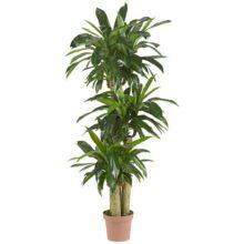 Nearly Natural 6584 Corn Stalk Dracaena Decorative Silk Plant, Green